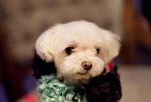 Puppy/Pet Joy / by Jacqueline Chen