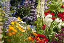 Bloemen en planten - flowers and plants / Natuur op zijn mooist… schitterende bloemen en planten - Nature at it's best… beautiful flowers and plants  / by Tuinen.nl