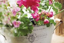 Tuindecoratie - container gardening / Inspiratie voor het decoreren van bloemen en planten - Inspiration for decoration flowers and plants