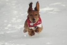 Dachshunds / Lots of photos of my dachshund Daisy, with other cute dogs seen along the way!
