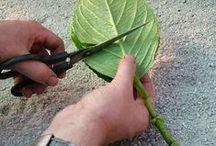DIY stekken - DIY cuttings / Alle tips voor het stekken van planten. Zet je tuin gratis vol planten met onze stektips