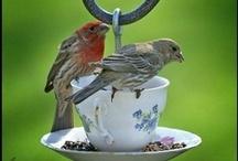 DIY voor de vogels - DIY 4 the birds / Bekijk hier onze tips voor vogels in de tuin. Bekijk ook onze recycle en upcycle tips.