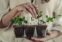 Secret Garden / My Outside Paradise  #garden #gogreen #flowerbeds / by Living the Gourmet