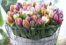 Springtime / A collection of things that remind me of Spring  #spring #flowers #beauty #primavera / by Living the Gourmet