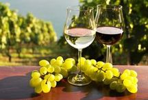 Israeli Wine / Discover the Israeli wine and where it's made!