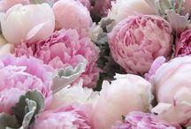 Fleurs & Vases