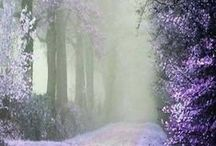 Purple Haze / The color purple in all it's majesty and beauty