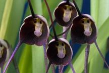 Bijzondere orchideeën / by Tuinen.nl