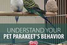 Parakeets - Pet Birds