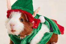 Holiday Pets - Small Animals & Birds