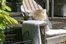 ::home : outdoor decor/garden::