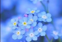 Flower  Flower  Flower / Flower