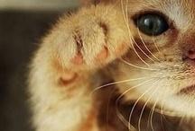 too cute / by Liz Davis