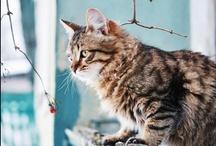 Cat Cat Cat / by Sonoe Kinoshita
