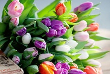 Tulip Tulip Tulip / Tulip / by Sonoe Kinoshita
