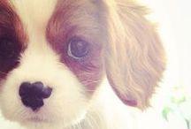 Cute Pets / by Heather DeSousa
