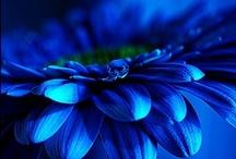 BLUE / Blue / by Sonoe Kinoshita