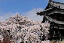 Sakura in Japan / by Sonoe Kinoshita
