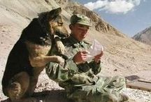 Soldiers/Canine Companions / Such special human beings and Pets / by Sandy Lee Cali