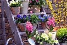 Garden Ideas / by Kristen Finn