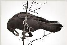 Beautiful Birds / by Michele Crocco