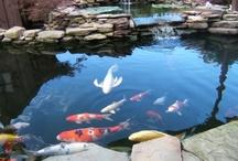Bonsai & Zen Garden