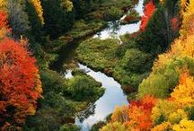 Fall / by Rachel Smitherman