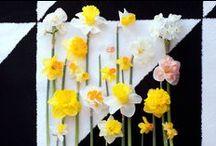 Belles plantes / fleurs
