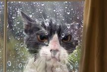 Crazy Cat Lady / Cat photos!!!! icanhazcheezburger, roflcat, lolcat, and more. / by Bad Girl Business