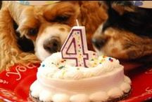 For My Loved Doggies