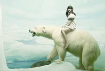 Wild Kingdom - Animal Crush / by Jessica Rae Sommer