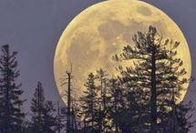 Sun, Moon & Stars / by Janice Doane