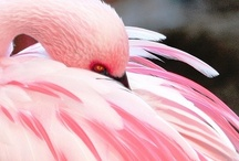 Flamingo Theme / by Kimberly Christain Designs Christain Designs