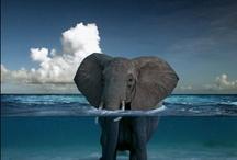 I <3 Elephants! / by LaVonne Ellis