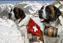 We Love Switzerland / Things we <3 about Switzerland - Dinge, die die Schweiz und uns bewegen.