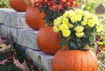 Fall~my favorite season! / by Courtney Kubit