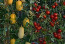 Gardening/Outside / by Rikki-Lynn Rapp