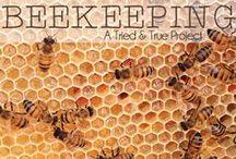 Bee Keeping / by Karen Erickson