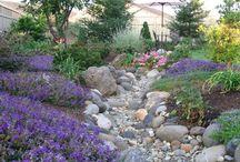 In The Garden / by Renee DiLorenzo