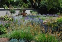 Luscious & Lawn-free / Swapping out a little-used lawn for a colorful, edible and drought tolerant garden is a heck of a lot easier than you think!  www.harmonyinthegarden.com / by Rebecca Sweet | Harmony in the Garden