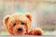 Teddy Bears! / by Renee DiLorenzo