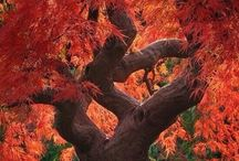 AUTUMN / Autumnal scenery and things to delight; Goblins and witches go bump in the night...  / by Connie Rodeman