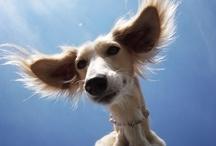 Stunning Pet Photography