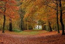 Autumn / One of my 4 favourite seasons