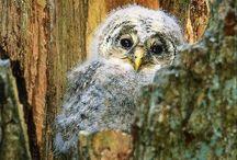 Owls / by Renee DiLorenzo