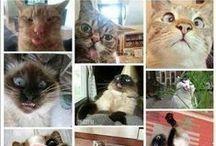 Cats / Funny cats.