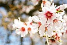 LB Springtime / Links to Celebrate Spring / by Carrie Anne Castillo