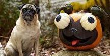 Halloween Pets