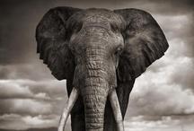 I ♥ Elephants / by UtahJenny