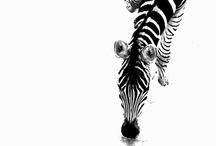 Black and White / by UtahJenny
